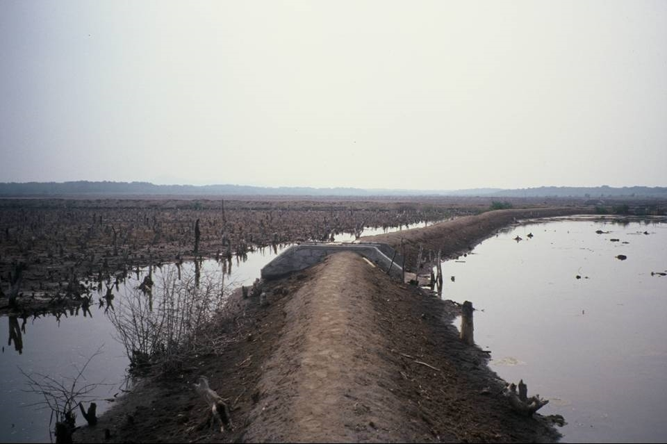 Mangrove destruction to make way for a shrimp farm, Nicaragua