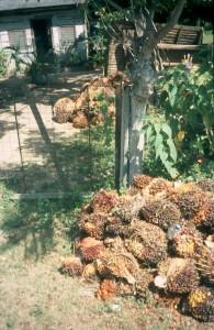 2007palmoil1-195x300
